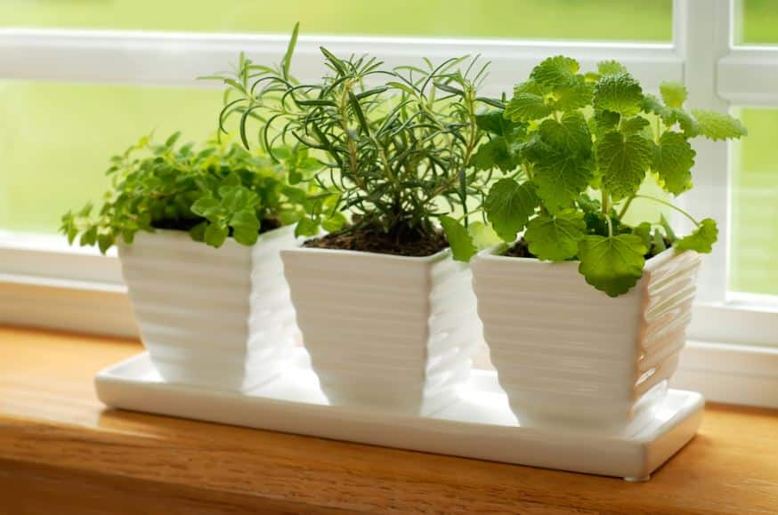 A Brief Guide to Indoor Gardening