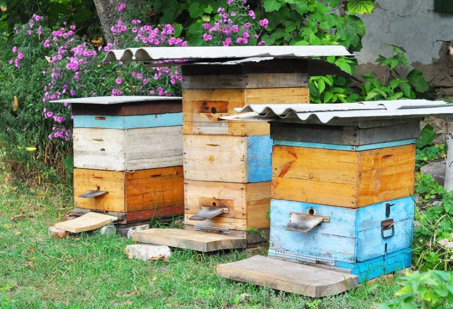How to Start a Beehive in Your Backyard?