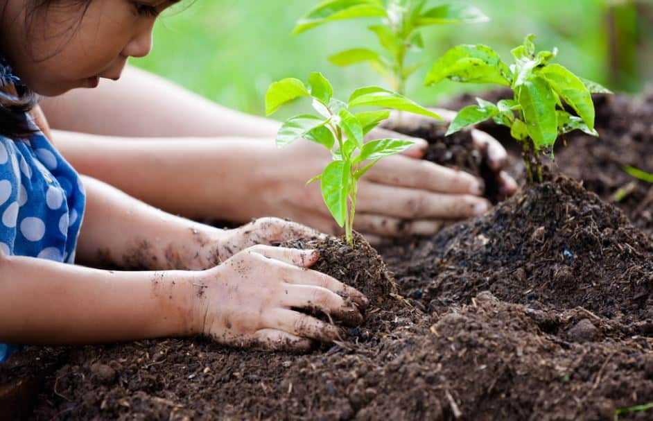 14 Easy Steps for Successful Planting
