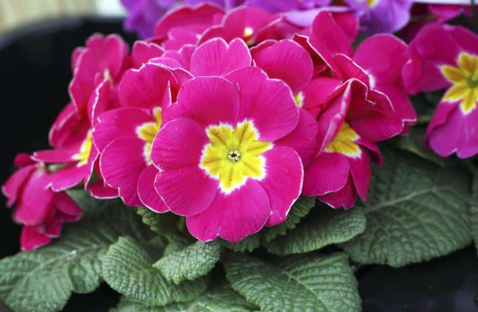 Customize Your Garden With Black Plants and Flowers