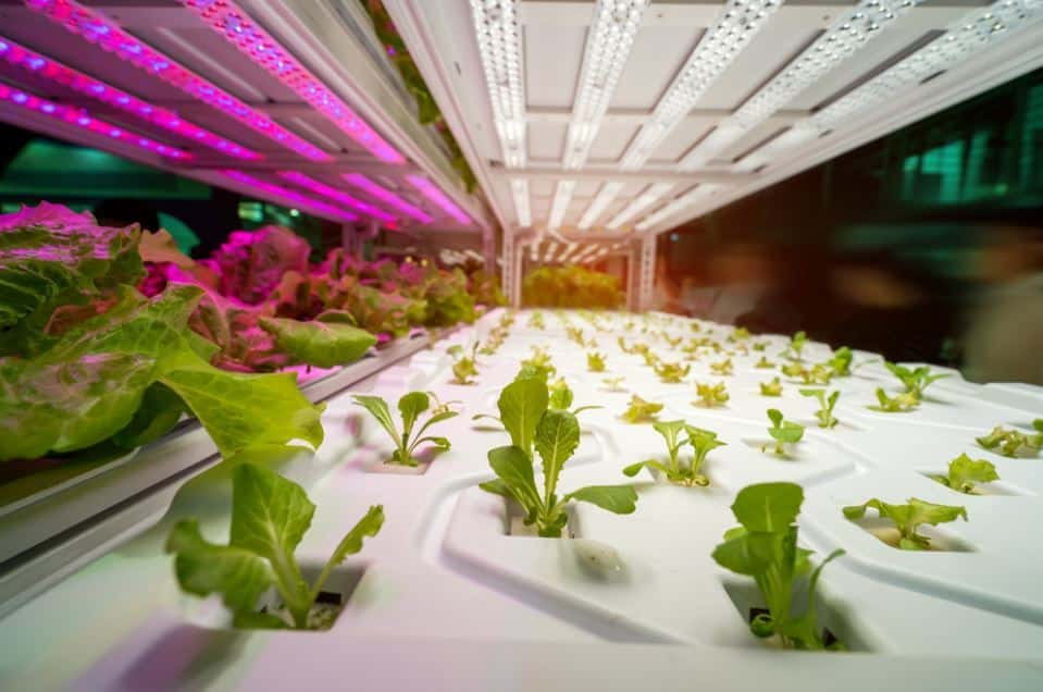Indoor Gardening With the Help of Hydroponic Grow Shop
