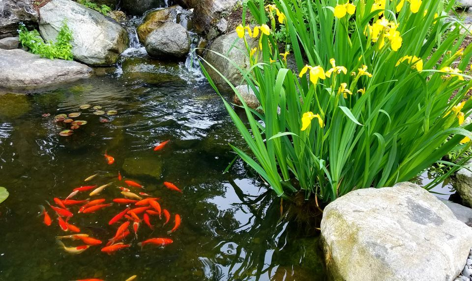 A Guide for Growing Fish in Backyard
