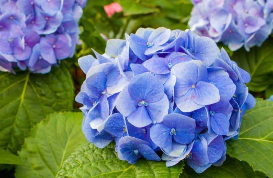 Gardening at Home: 14 Plants That Will Look Fabulous in Your Yard