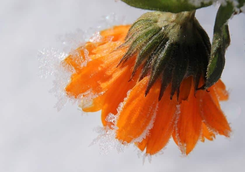 How to Look After Your Garden in Winter?