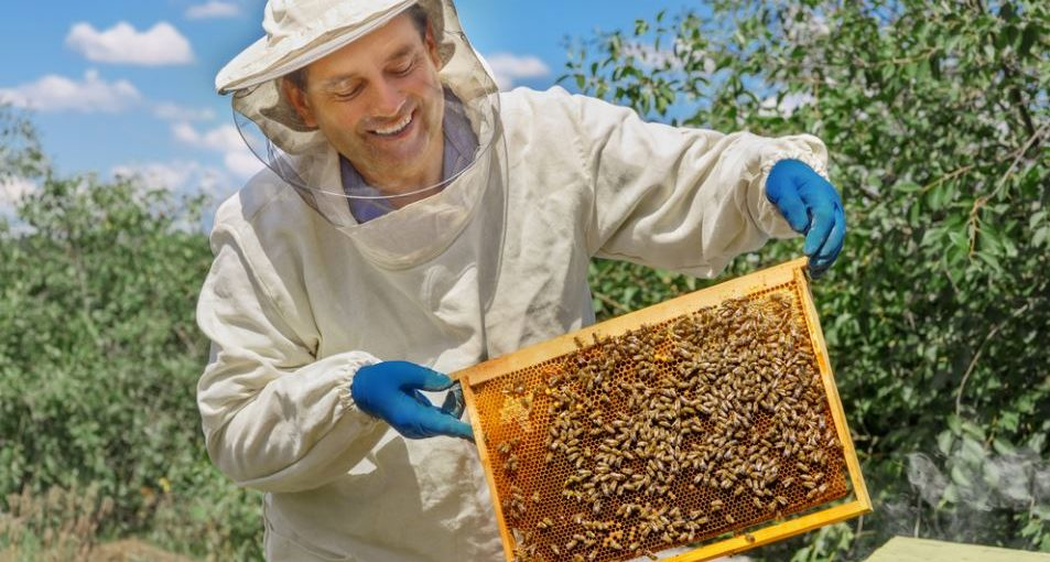 Beekeeping Tips Every Beginner Should Know