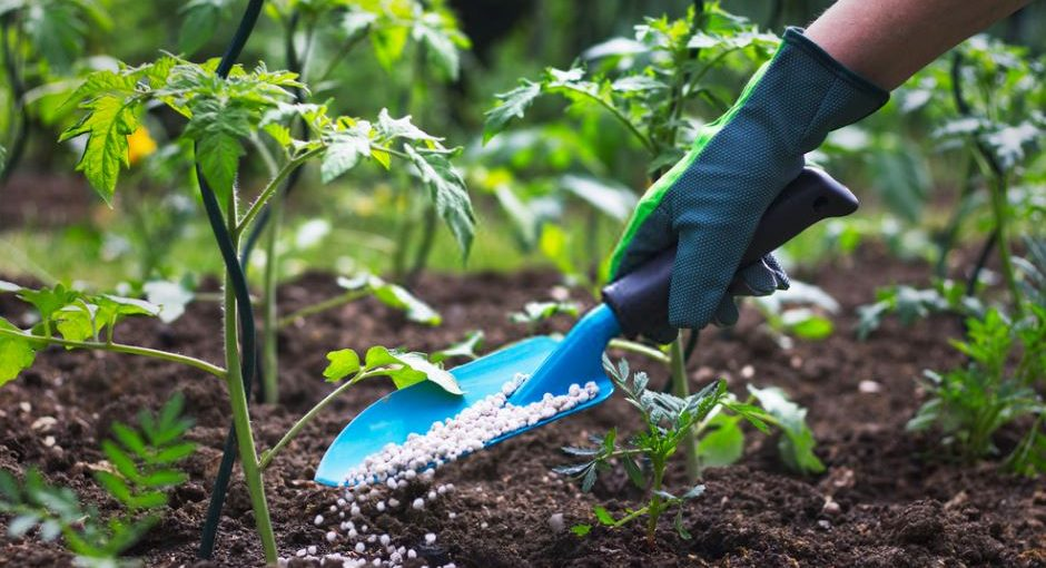 6 Natural Fertilizers for Plants