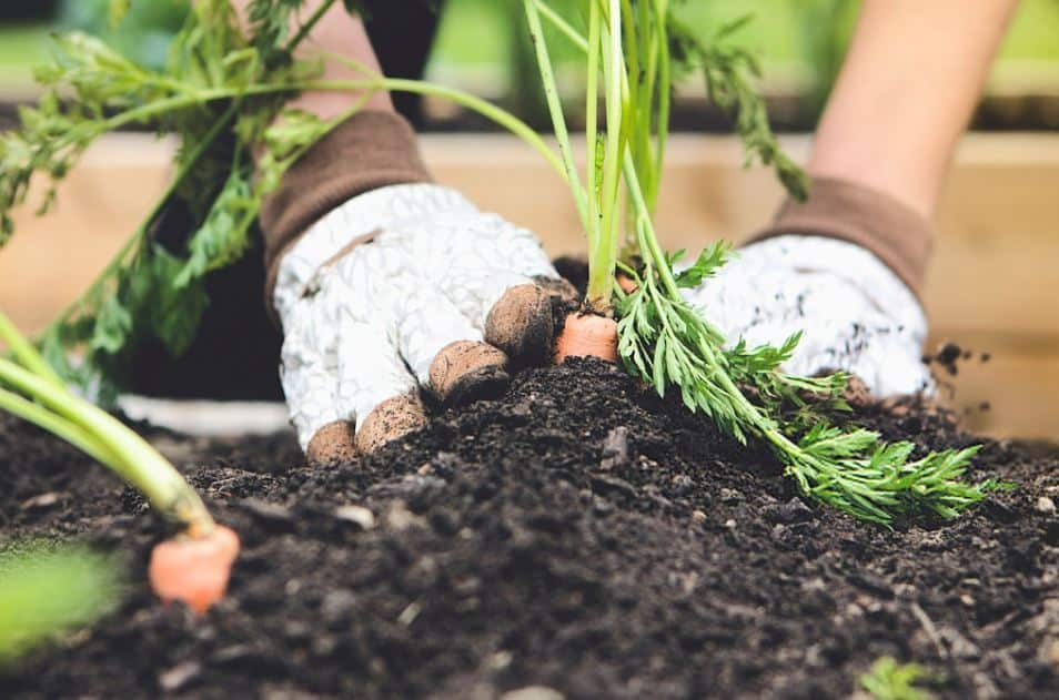 Importance of Testing Your Garden Soil