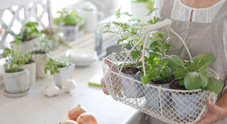 Growing Vegetable Indoor Beginner's Guide