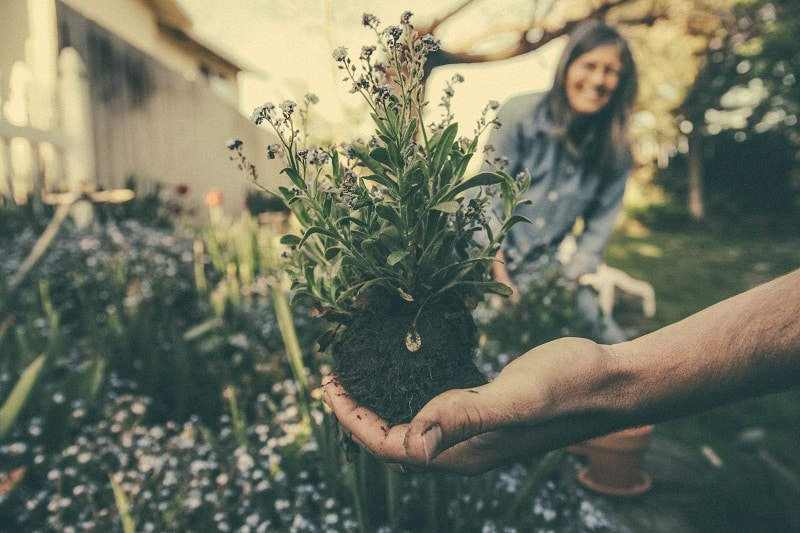 Why Should You Spend Time In The Garden