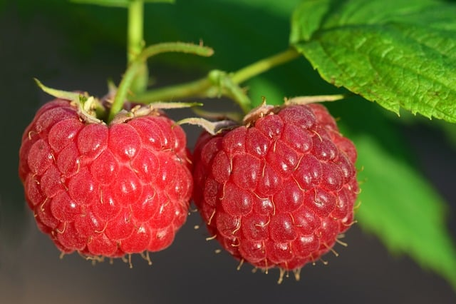 7 Easy to Grow Fruits in Your Home Garden