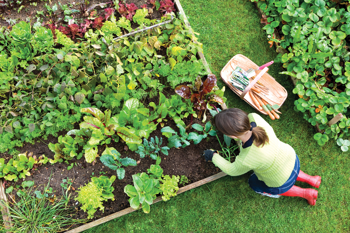 5 Must-Have Things For Frugal Gardening Maintenance