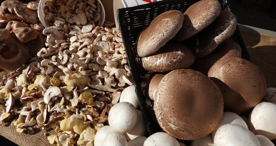 Grow Portobello Mushrooms In 8 Easy Steps