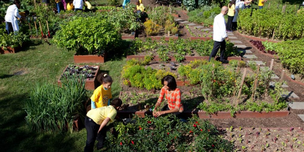 Prepare and Grow a Successful Vegetable Garden