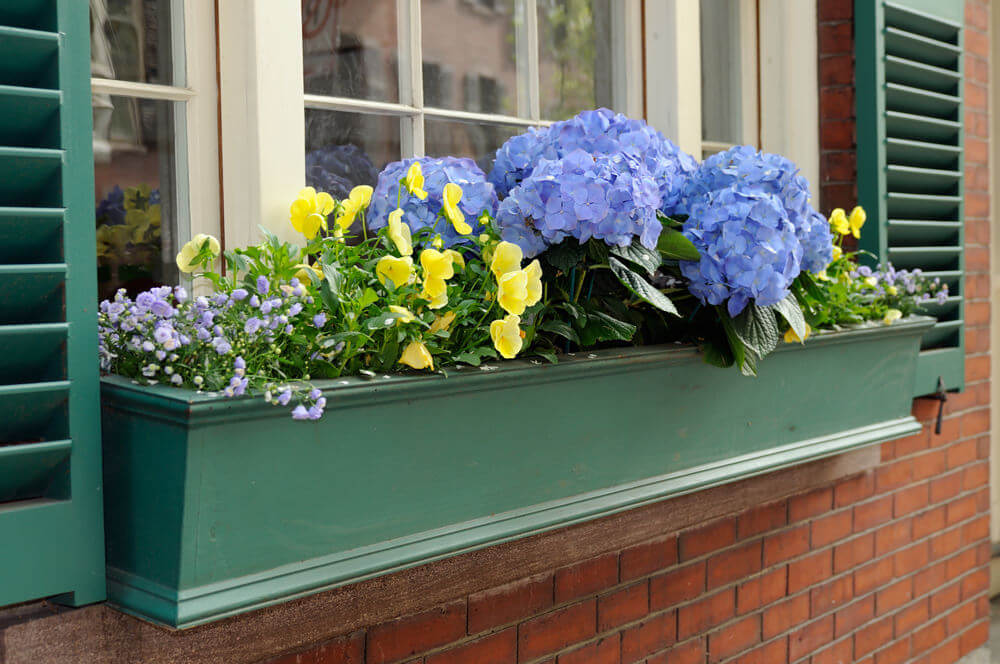 Which Flowers Are Best for Your Window Boxes
