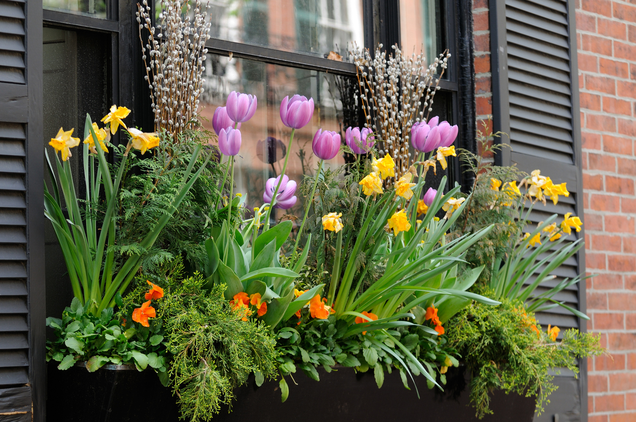 Which Flowers Are Best for Your Flower Window Boxes